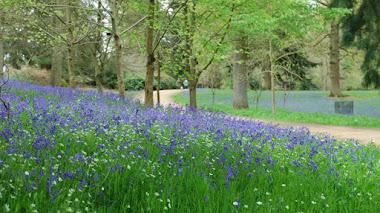 Wakehurst. Un jardín botánico con el mayor proyecto de conservación de semillas del mundo