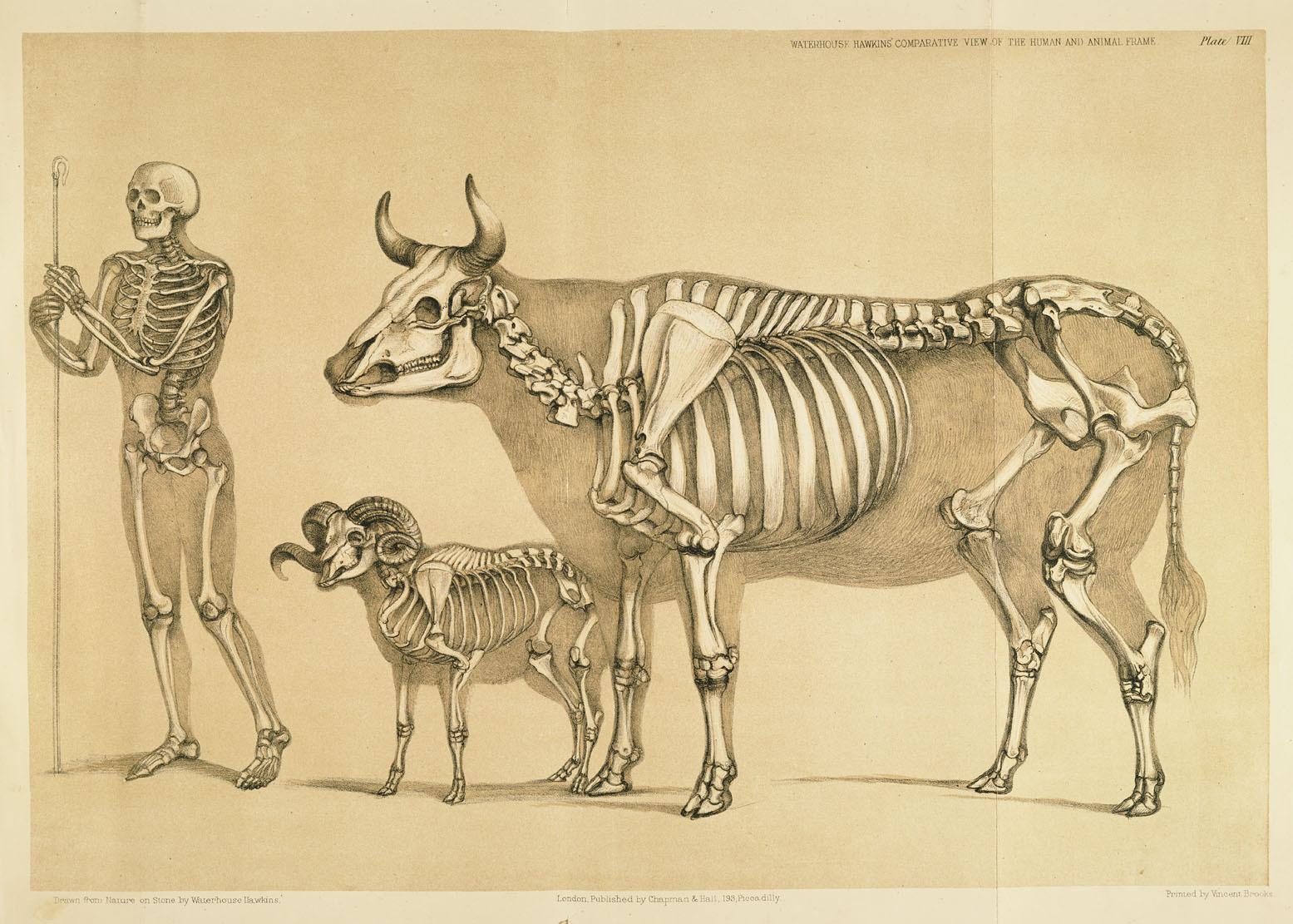El Descanso del Escriba: An Atlas of animal anatomy for artists