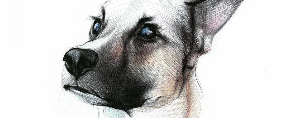 04-Dog-Yelena-Yefimova-Animals-Drawn-with-Ballpoint-Pens-www-designstack-co