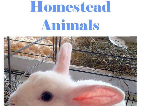 False Pregnancy in Homestead Animals
