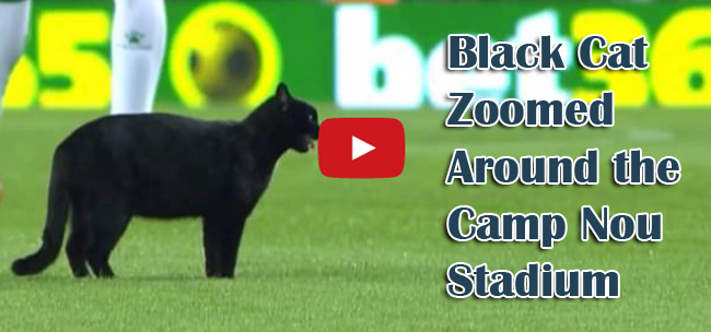 Video of Black Cat Zoomed Around the Camp Nou Stadium During Football Match of Barcelona vs Elche