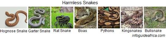 Harmless Snakes