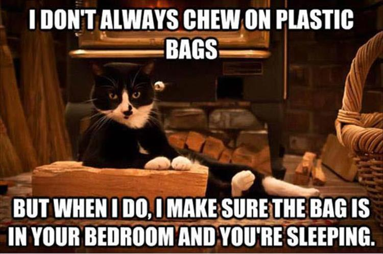 30 Funny animal captions - part 56, funny captioned animal picture, funny animals