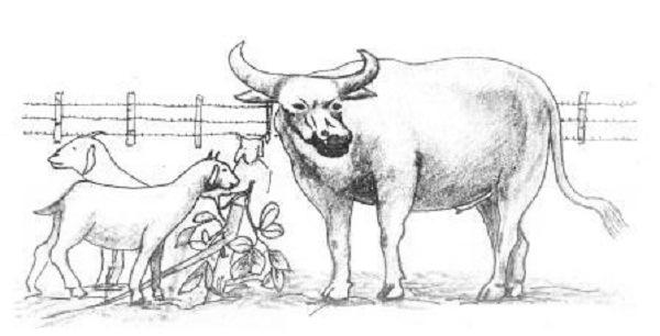gambar ilustrasi binatang