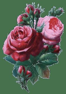 Wallpapers For Iphone 3 Zoom Dise 209 O Y Fotografia 30 Rosas Vintage Para Scrap