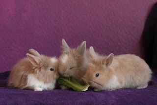Fakta dan Mitos Dalam Memelihara Kelinci