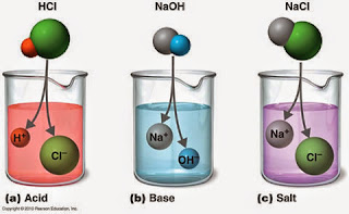 acids,bases,salts