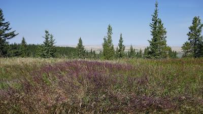 Cypress Hills, Alberta, Elkwater, Horseshoe Canyon, viewpoint, grass