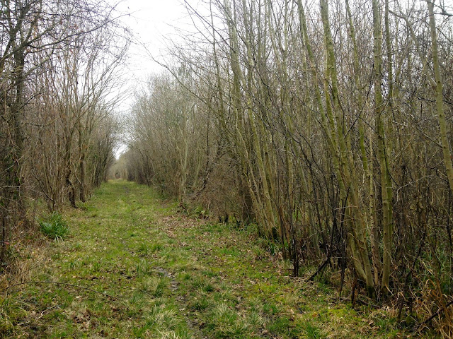 Foxley Wood, Norfolk