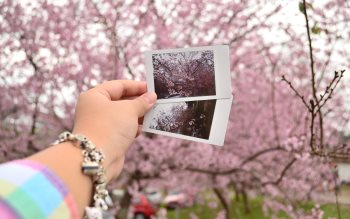 Wallpaper: Collage with Sakura flowers