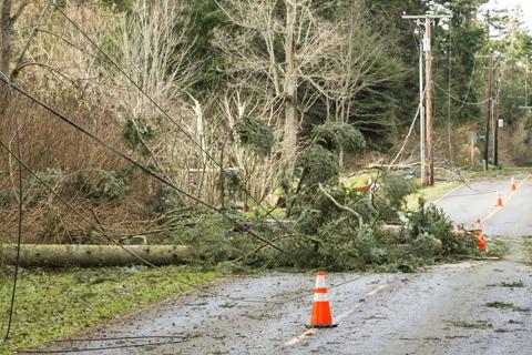 Interfering tree fallen over powerlines in Alpharetta Ga