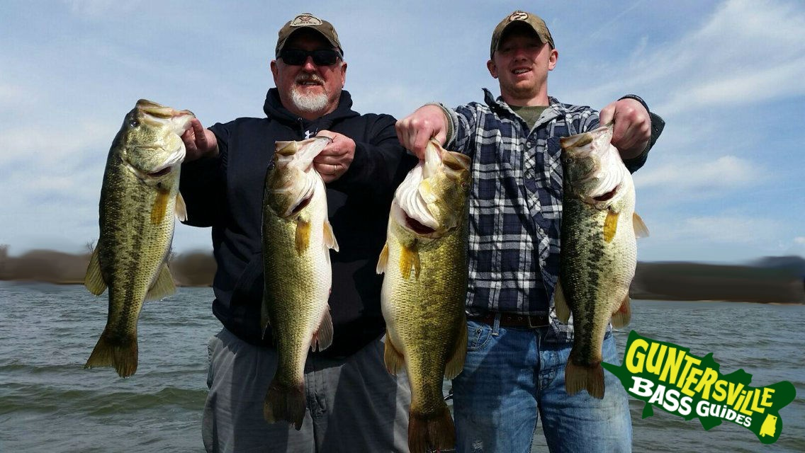 Lake guntersville fishing report guntersville bass guides for Seven b s fishing report