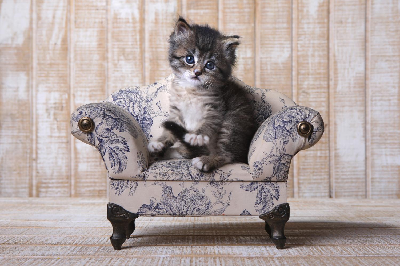 Kucing comel duduk atas kerusi