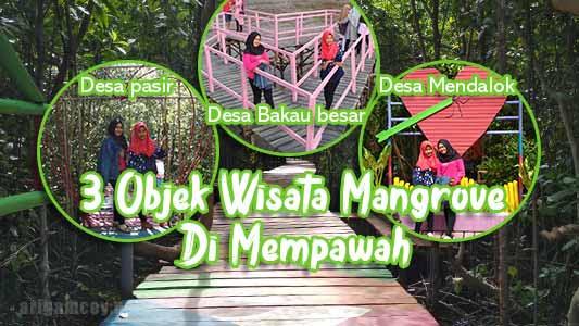 3 objek wisata mangrove yang wajib kalian kunjungi di kabupaten mempawah