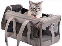 Prosedur Membawa Hewan Peliharaan Kucing atau Anjing Berpindah Kota dengan Pesawat atau Kapal