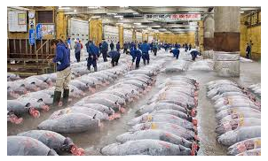 Tsukiji Fish Market Japan