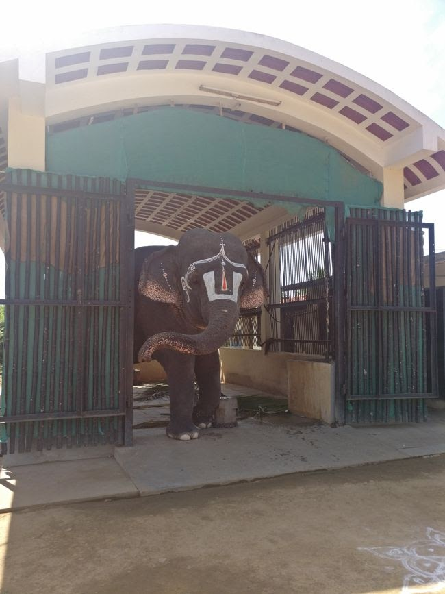 Elephant At Yoga Ramachandra Swamy Temple