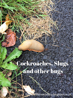 Cockroaches, Slugs and other Bugs - A Missionary Life