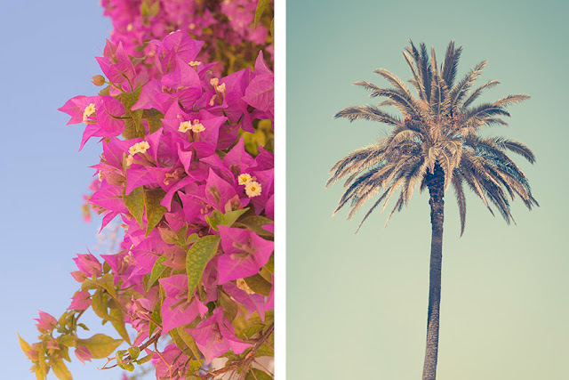 Bougainvilla and palm tree in Lisbon, Portugal