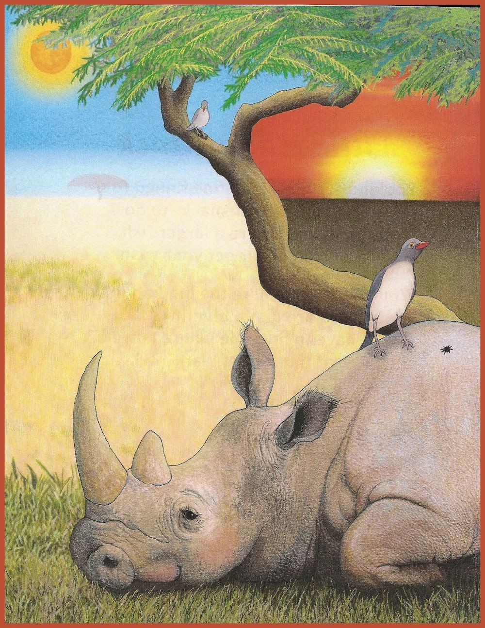 tick bird and rhinoceros relationship with god