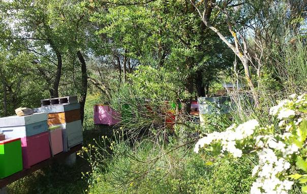 Μελισσοκομείο μέσα στο δάσος: Γιατί τα έβαλε σε αυτό το μέρος τα μελίσσια;