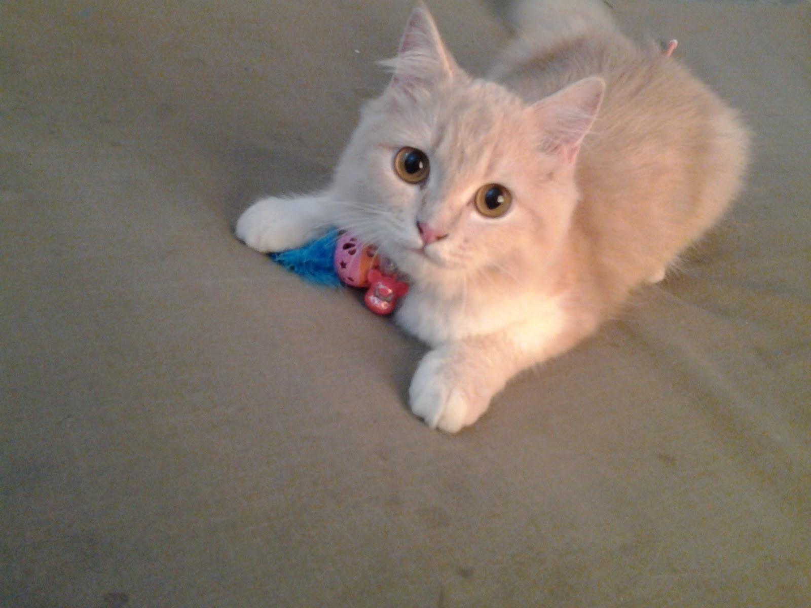 Kucing Kesayangan Saya
