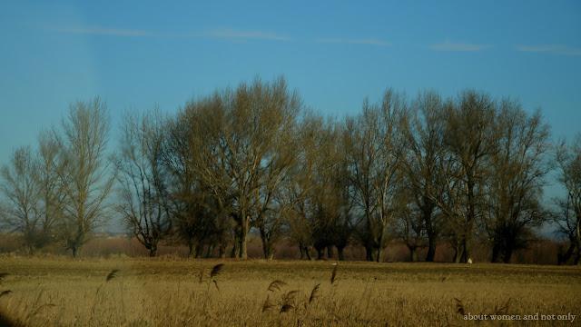 vegetatie in februarie