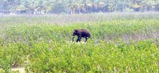 اترکھنڈ کے ہریدوار میں ہاتھیوں نے تیار فصلوں کو تباہ کردیا