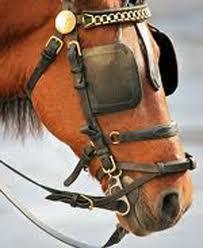 Hasil gambar untuk gambar kacamata kuda