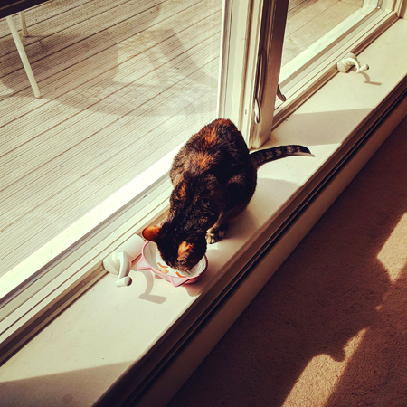 image of Sophie the Torbie Cat eating her breakfast out of a tiny, cat-shaped bowl on the window sill of the dining room picture window