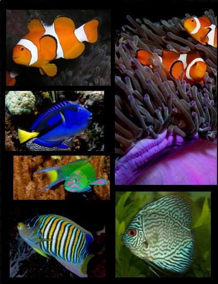 تجميعة لصور أجمل فصائل الاسماك في العالم