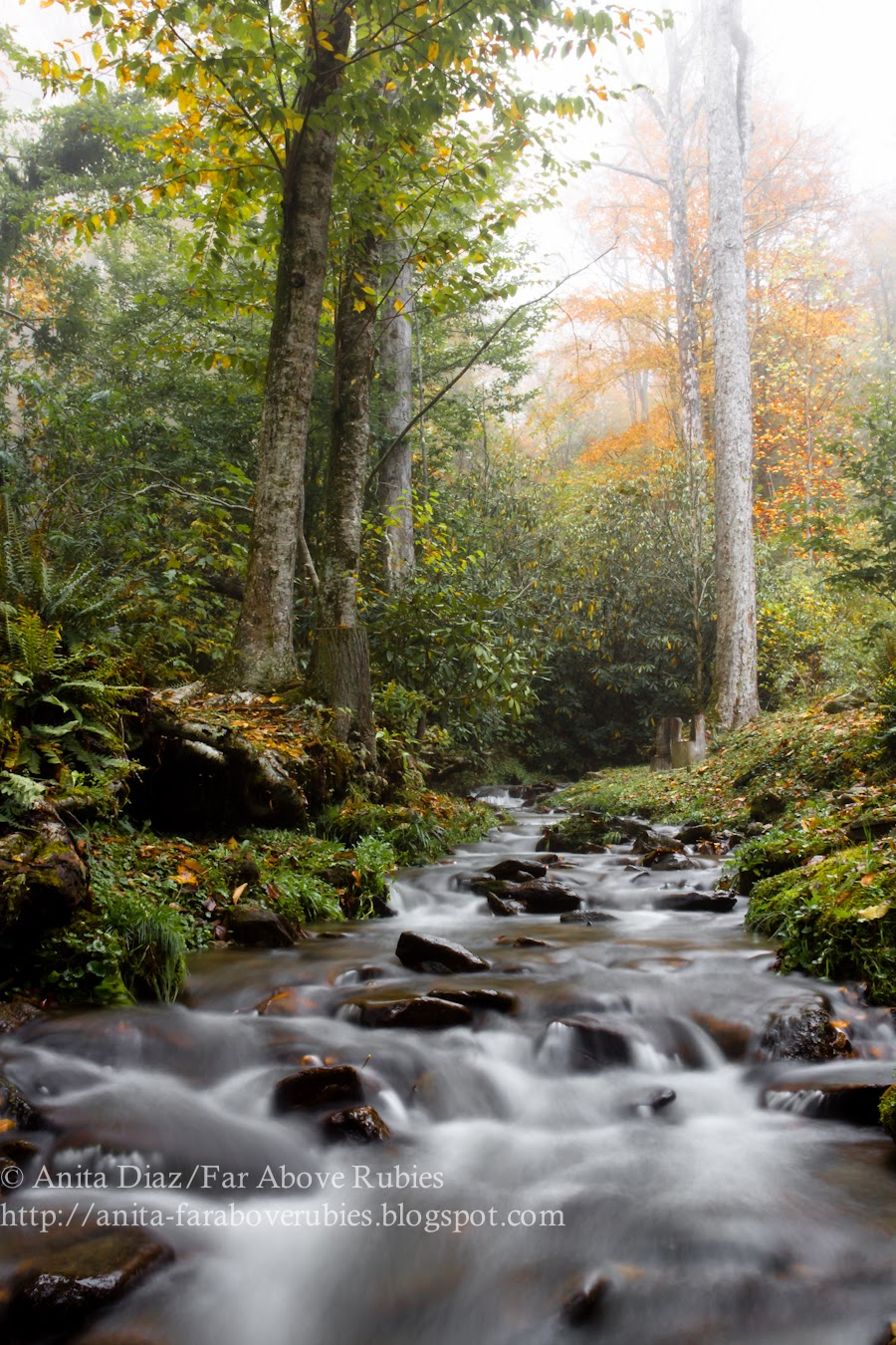 Smoky Mountain Autumn