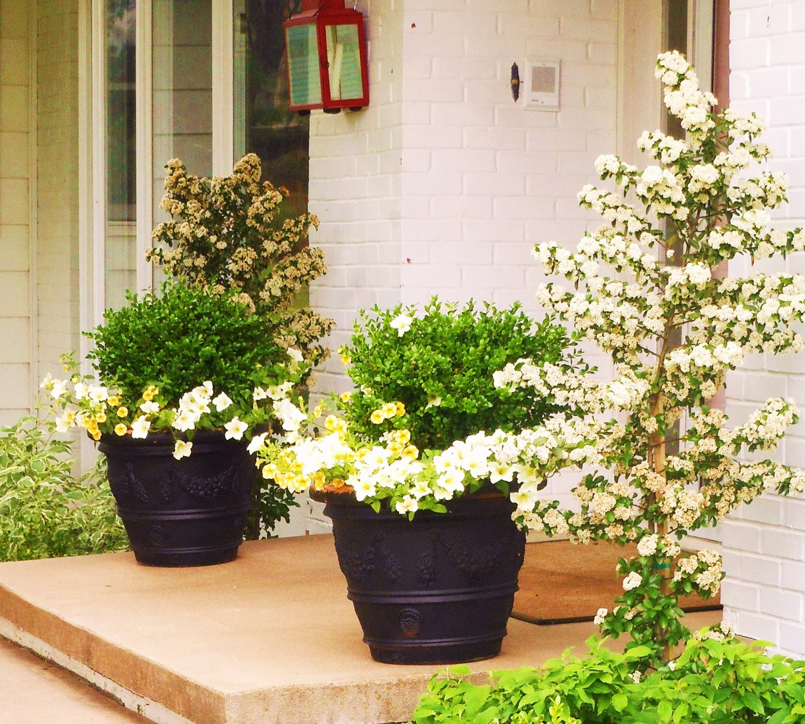 Knockout Roses Pots Front Door