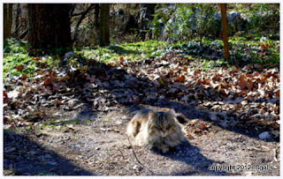 Feral Cat resting in forest