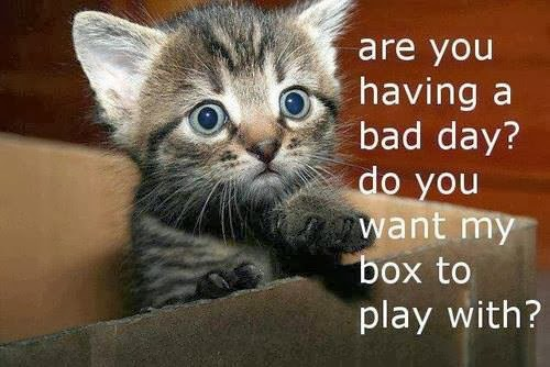 Funny Nice Day: 8 Wonderful Cats Quotes