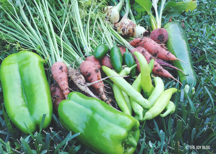 Summer Garden Harvest // Veggie Garden Updates: Mid Summer 2018 | www.thejoyblog.net