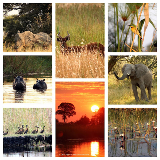 ibis, kingfishers, bee-eaters, pygmy owls, whistling ducks, elephants, hippos and water kudus in the Zambezi Region (formerly known as Caprivi), at the banks of the Kwando River in the Mashi Conservancy area.