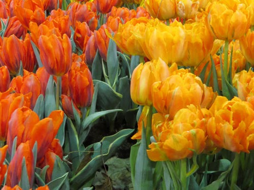 Philadelphia Flower Show 2019 - orange