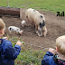 10 Things You Need To Know Before Visiting Piglets Adventure Farm In York | Family Day Out Review