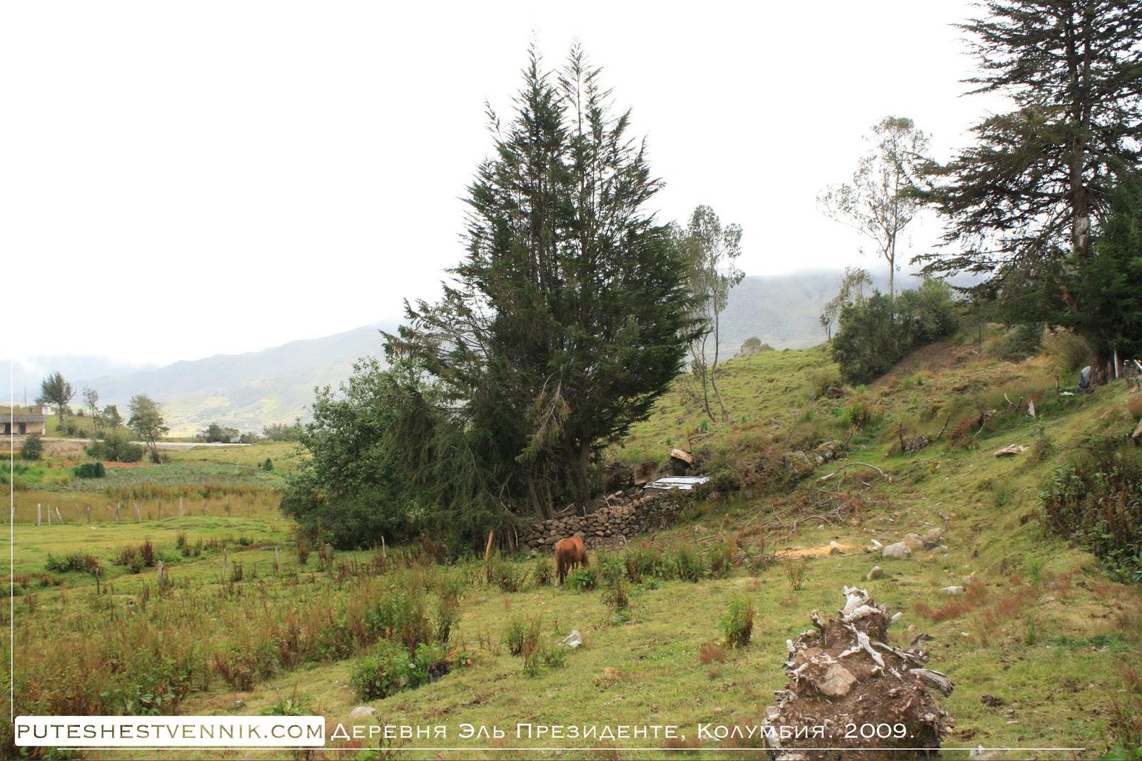 Лошадь на окраине деревни