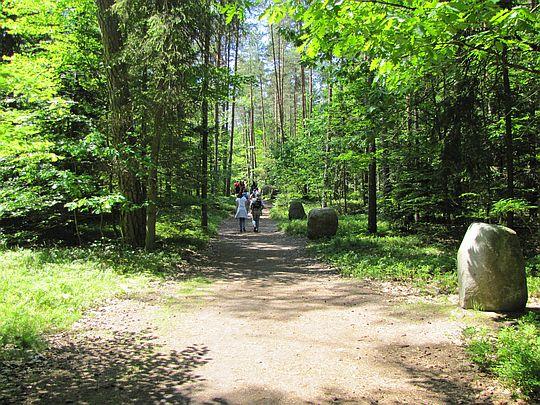 Ścieżka na Bukową Górę (Droga Pałacowa).