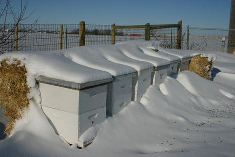 Μελισσοκομικές συμβουλές για τον μήνα Ιανουάριο