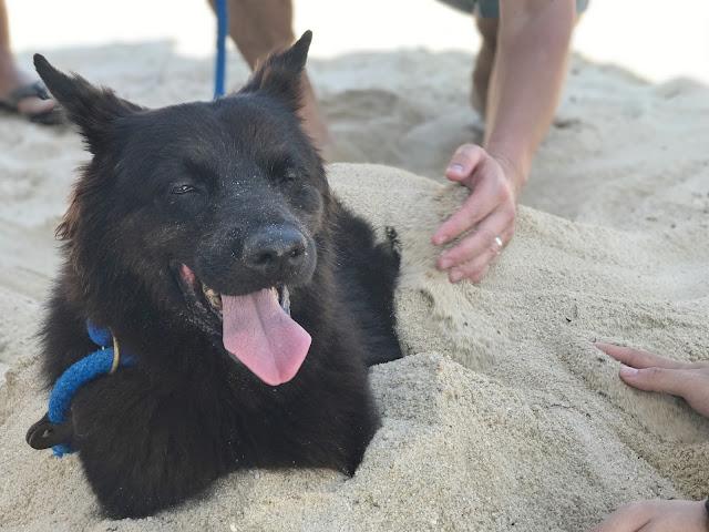 Family Fun Day Pets Singapore