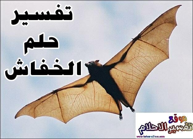 تفسير حلم الخفاش أو الوطواط في المنام