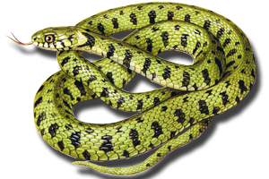 Study Material and Summary of Snake NCERT Class 10th