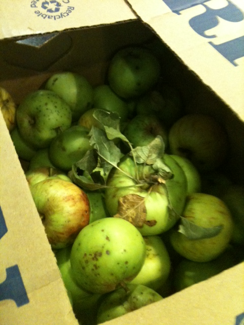 Apfelmus kochen Apfelpfannkuchen Apple Crumble