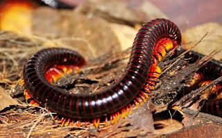 Contoh-contoh Hewan Anggota Filum Arthropoda