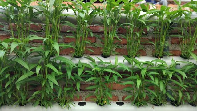 Mengenal Hidroponik Sebagai Upaya Menuju Konsumsi Sayuran Sehat