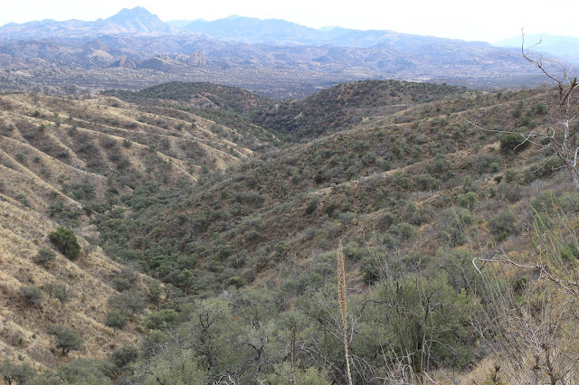 Guided%2BCoues%2BDeer%2BHunts%2Bin%2BSonora%2BMexico%2Bwith%2BJay%2BScott%2Band%2BDarr%2BColburn%2BDIY%2Band%2BFully%2BOutfitted%2B25.JPG