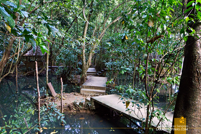 El Nido Canopy Walk Swamp
